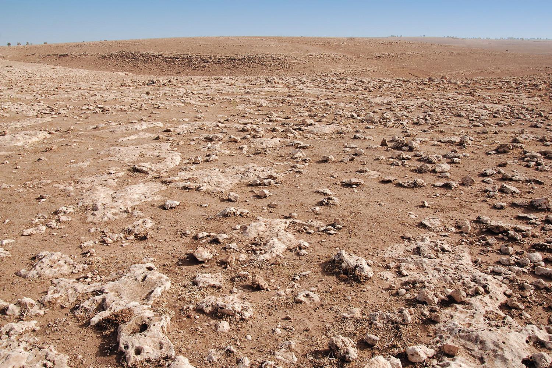 Olivie company desert